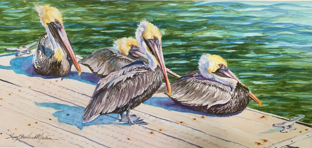 """Pawleys Pelicans"" watercolor c. SSM 2019 giclee prints also available"